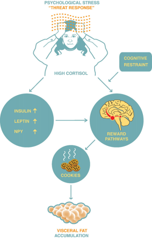 cortisol and body fat